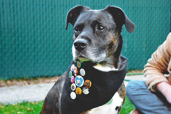 dog wearing a bandana with buttons on it